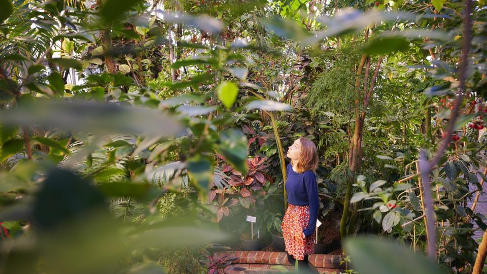 Nainen katsoo kasveja kasvitieteellisessä puutarhassa