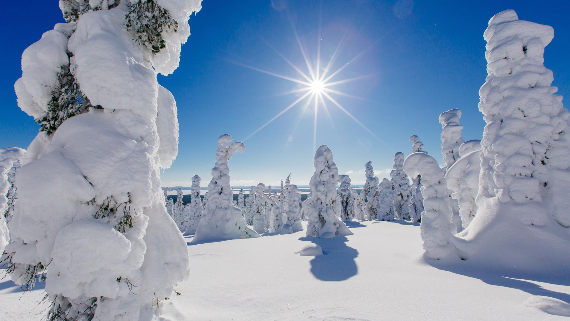 A photo from snowy forest in Northern Finland.